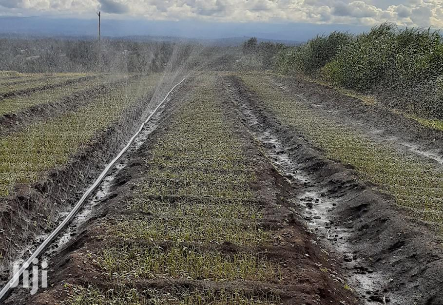 Rain Hose Irrigation System In Kenya