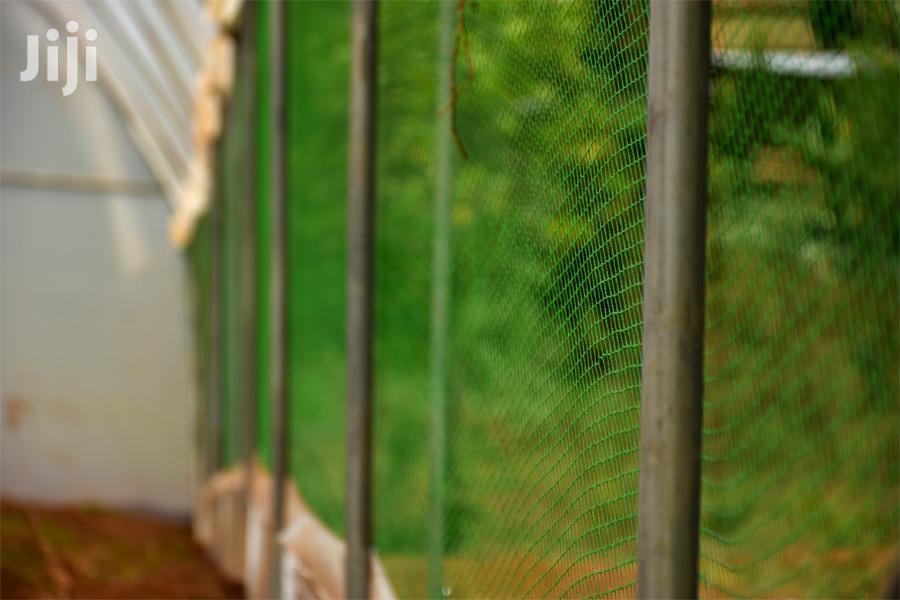 Bird Nets In Kenya