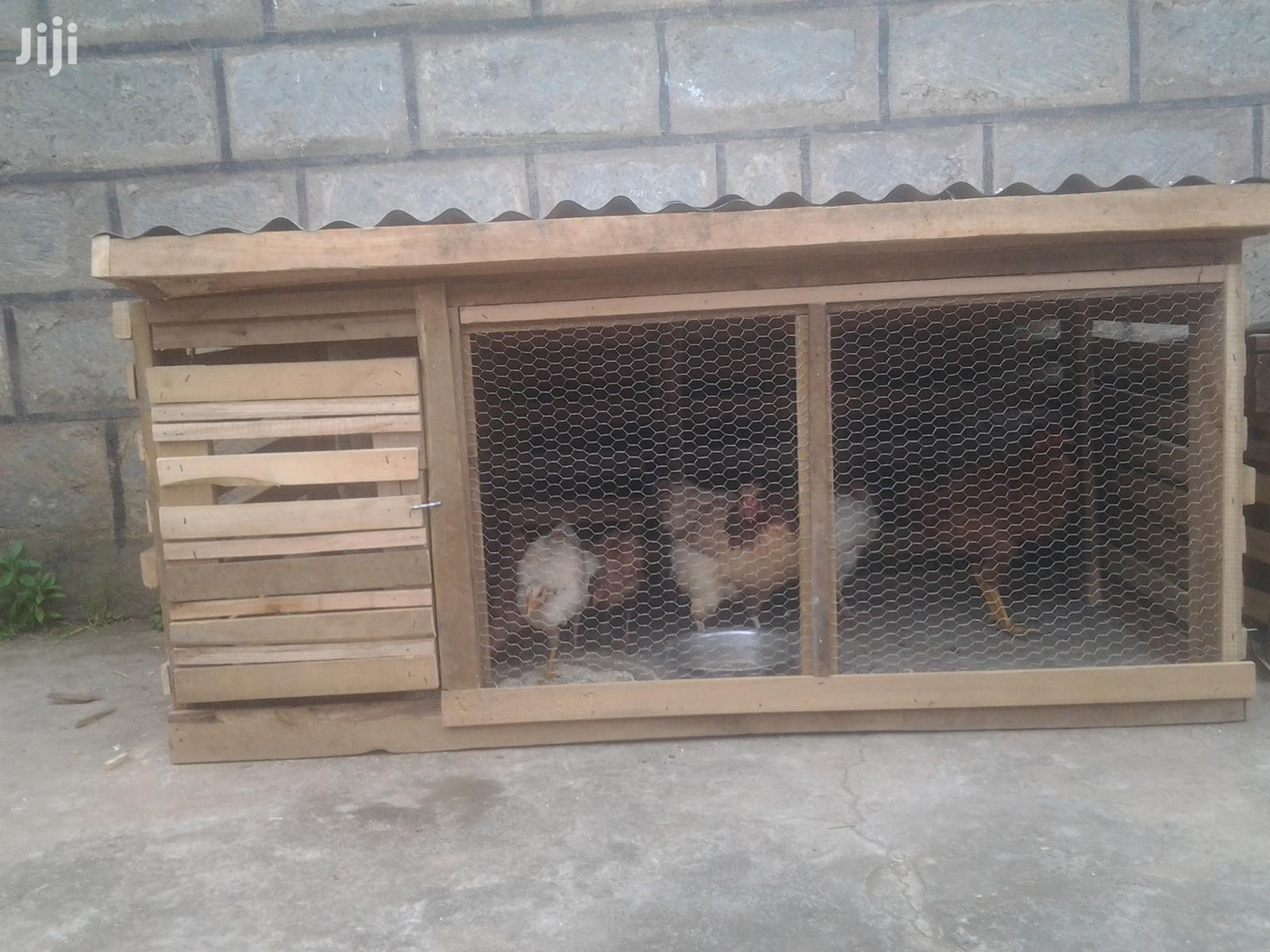 Archive: Modern Chicken Cages For 10 Chicken