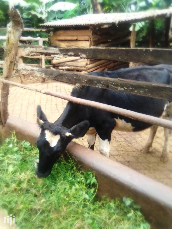 Tunyai6acres | Land & Plots For Sale for sale in Chiakariga, Tharaka-Nithi, Kenya