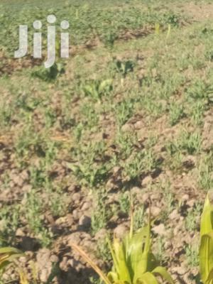 2and Half Acre on Sale Magumu, Gacurio Kinangop   Land & Plots For Sale for sale in Nyandarua, North Kinangop