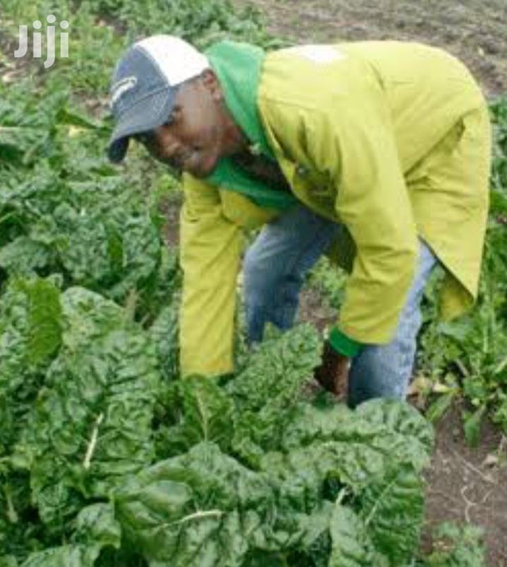 Archive: Farm Job Available