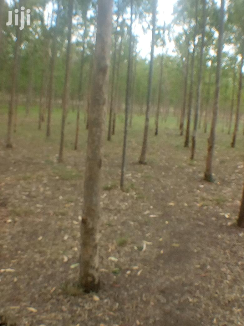 Archive: Agricultural Acres For Sale