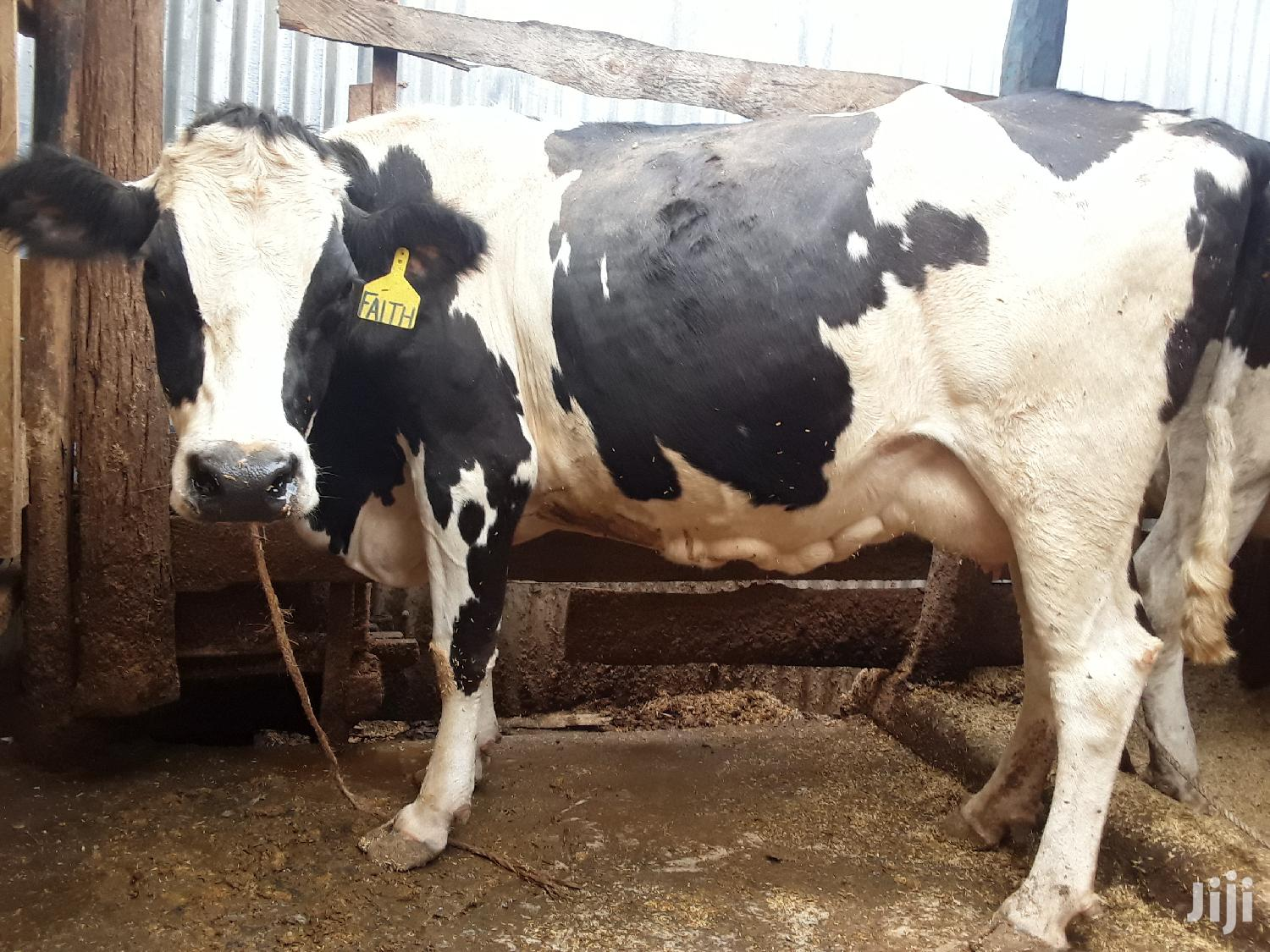 Pedigree High Yielding Dairy Cow | Livestock & Poultry for sale in Githunguri, Kiambu, Kenya