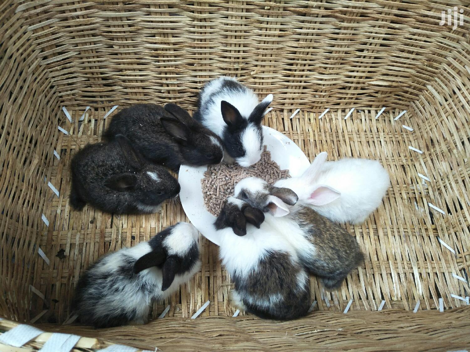 1 Month Old Baby Bunnies | Other Animals for sale in Nairobi Central, Nairobi, Kenya