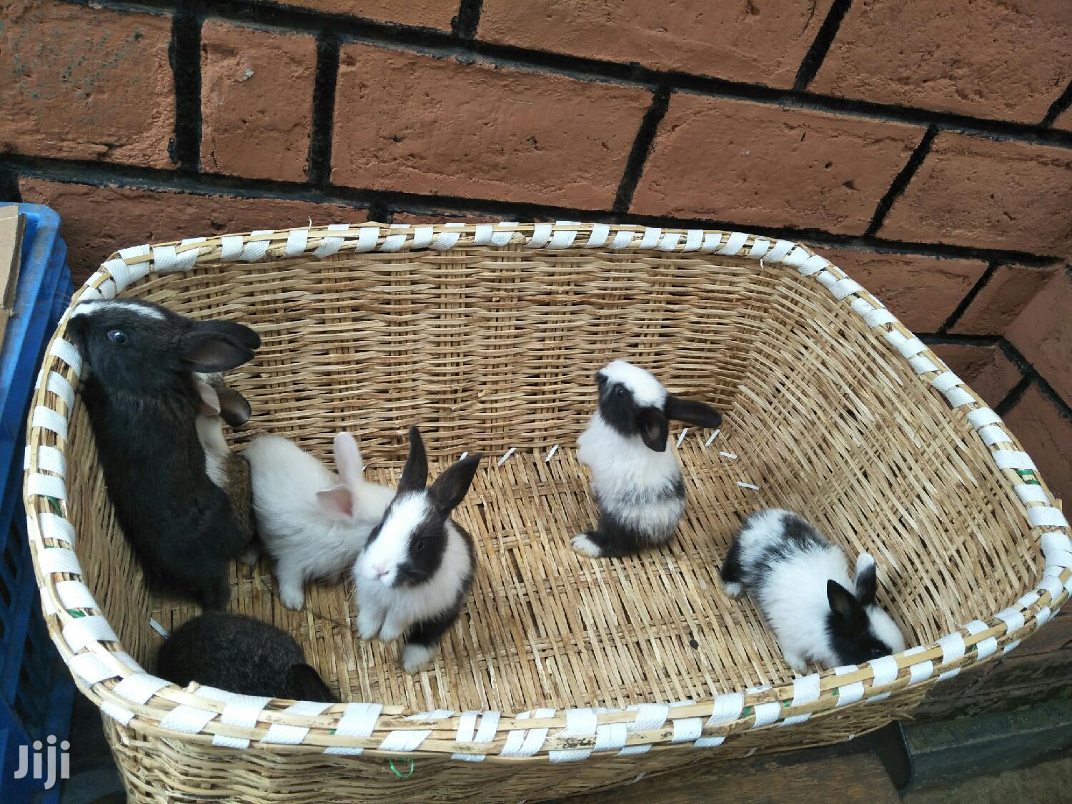 1 Month Old Baby Bunnies