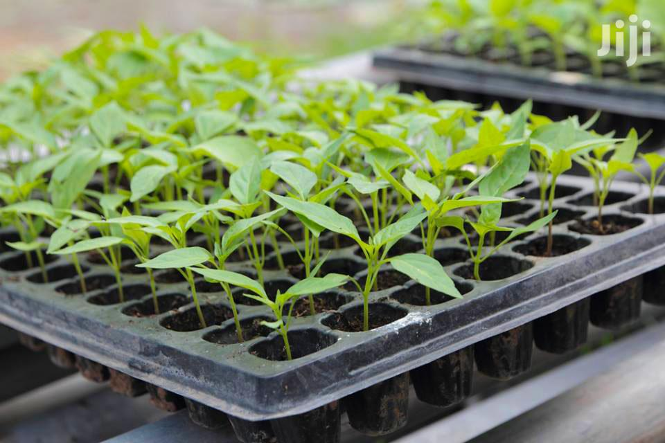 Seedling Trays And Planting Trays In Kenya