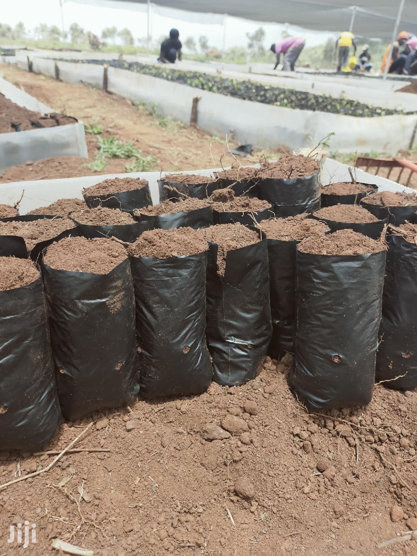 4*6 Seedling Bags
