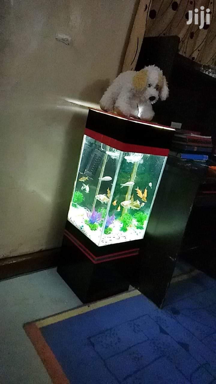 Office/Living Room Tower Aquarium   Fish for sale in Lavington, Nairobi, Kenya