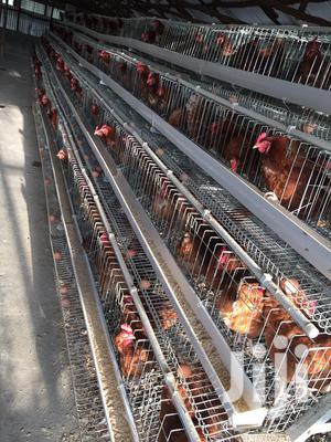 Chicken Cages For Sale   Farm Machinery & Equipment for sale in Nairobi, Kasarani