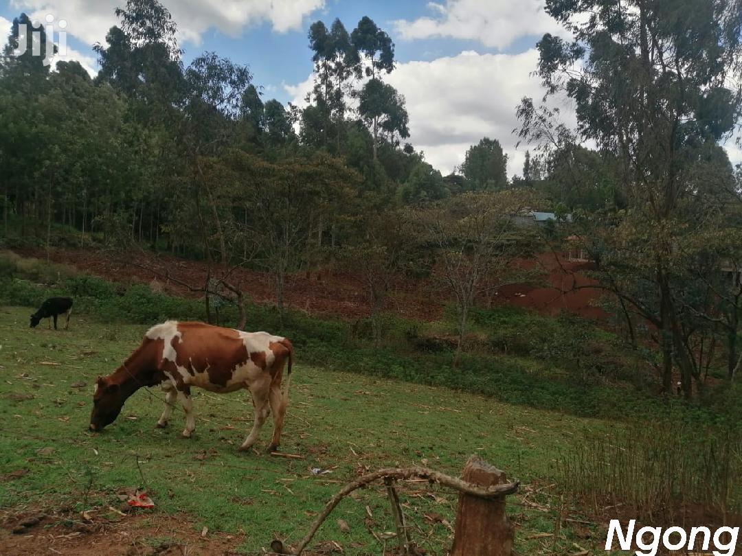 Land For Sale 50/100 | Land & Plots For Sale for sale in Ngong, Kajiado, Kenya
