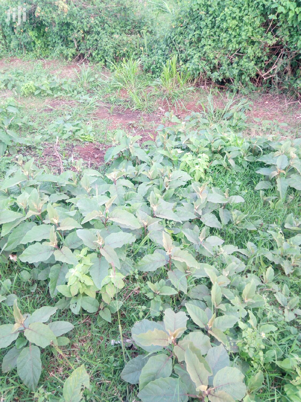 1.1 Acres Plot in Kilimani Yaya for Lease