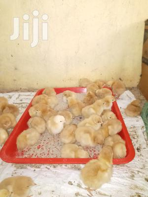 One Day Old Chicks | Livestock & Poultry for sale in Nairobi, Umoja
