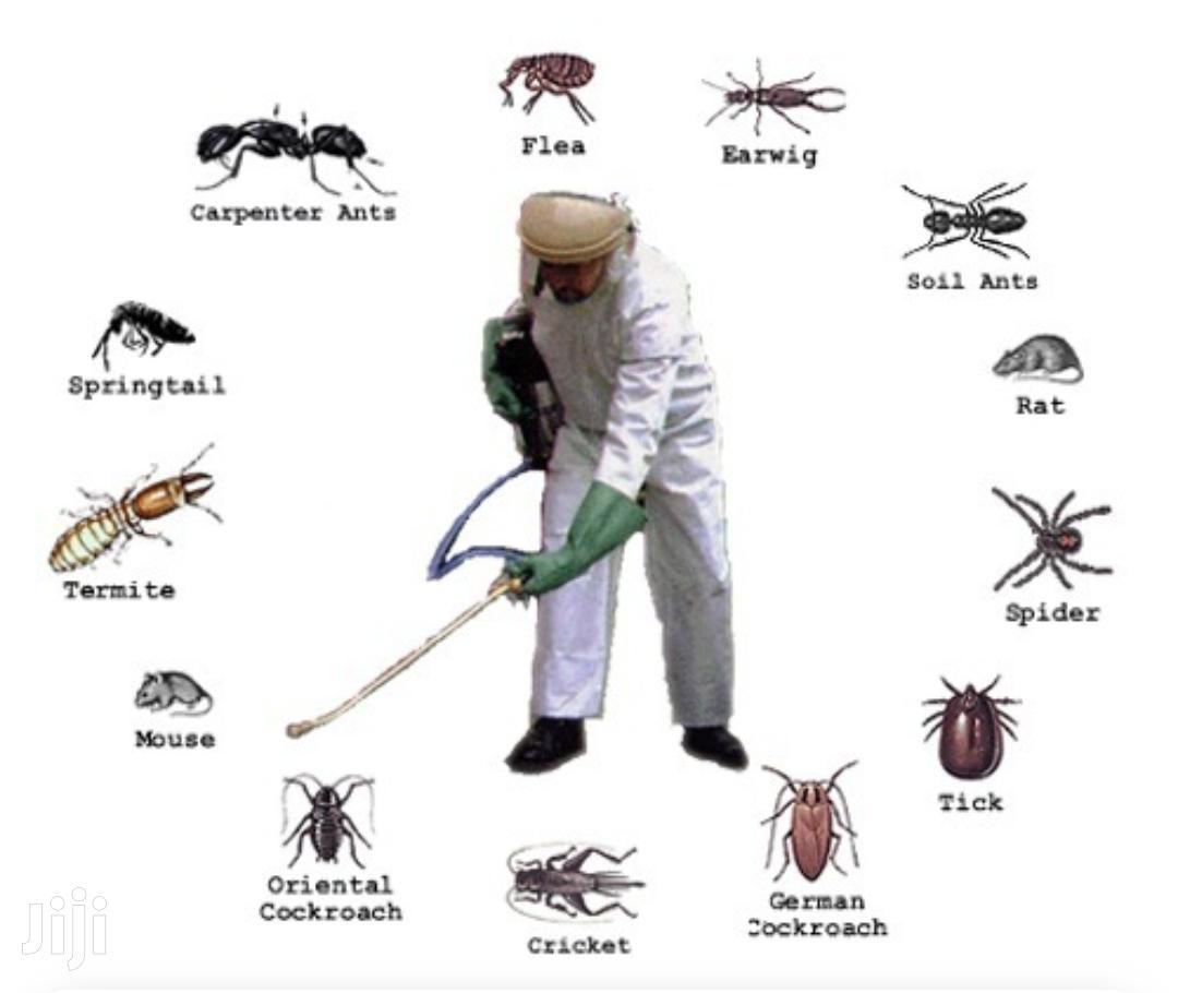 Ella Cockroaches Bedbugs Eradication Services In Embakasi In Embakasi Cleaning Services Irene Mutinda Jiji Co Ke