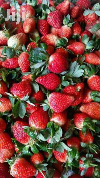 Assorted Hybrid Berries Seedlings Available At Two Hundred Bobs Only | Feeds, Supplements & Seeds for sale in Nairobi Central, Nairobi, Kenya