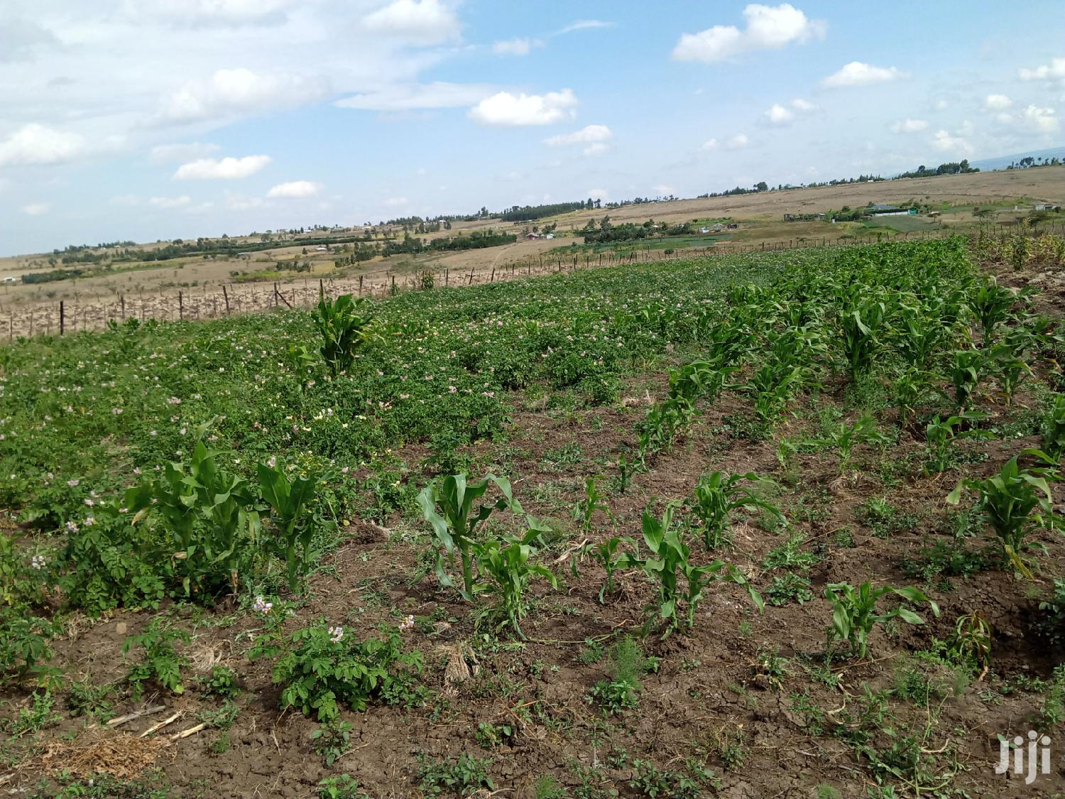 2acres Land for Sale at Makutano,Near Wiyumiririe Idp Area | Land & Plots For Sale for sale in Ngobit, Laikipia, Kenya