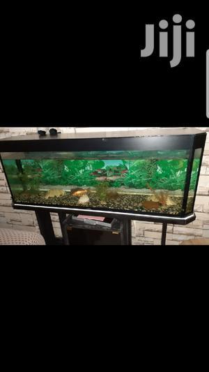 250 Litre Aquarium | Fish for sale in Nairobi, Embakasi