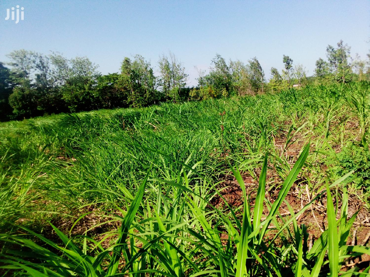 1 And Half Acre Land For Sale At Makuyu