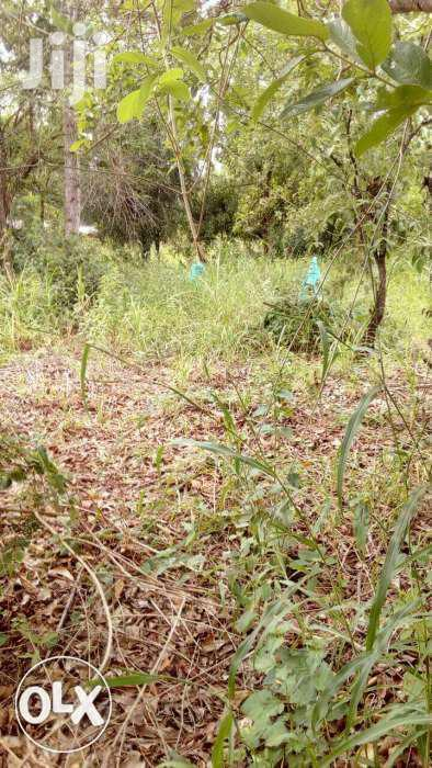 1 Acre Touching A Permanent Dam For Sale In Ngatho,Thika   Land & Plots For Sale for sale in Bunyala West (Budalangi), Busia, Kenya