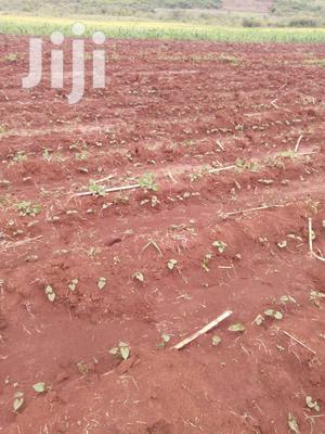 Kirinyaga Kimbimbi 5 Acres Kes 650K   Land & Plots For Sale for sale in Kirinyaga, Mutithi
