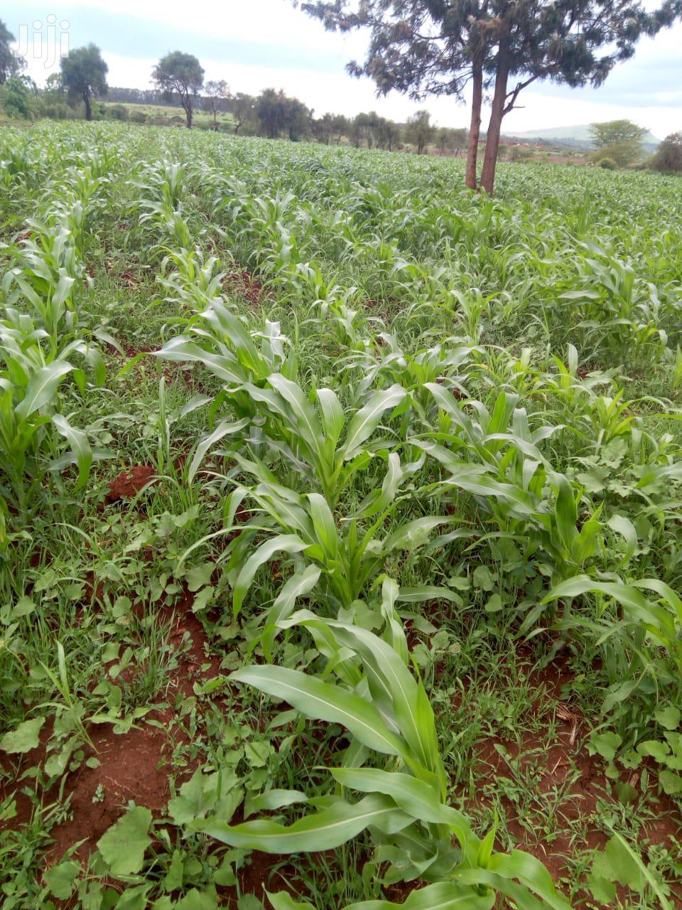 5 Acres For Sale In Kimbimbi Kirinyaga