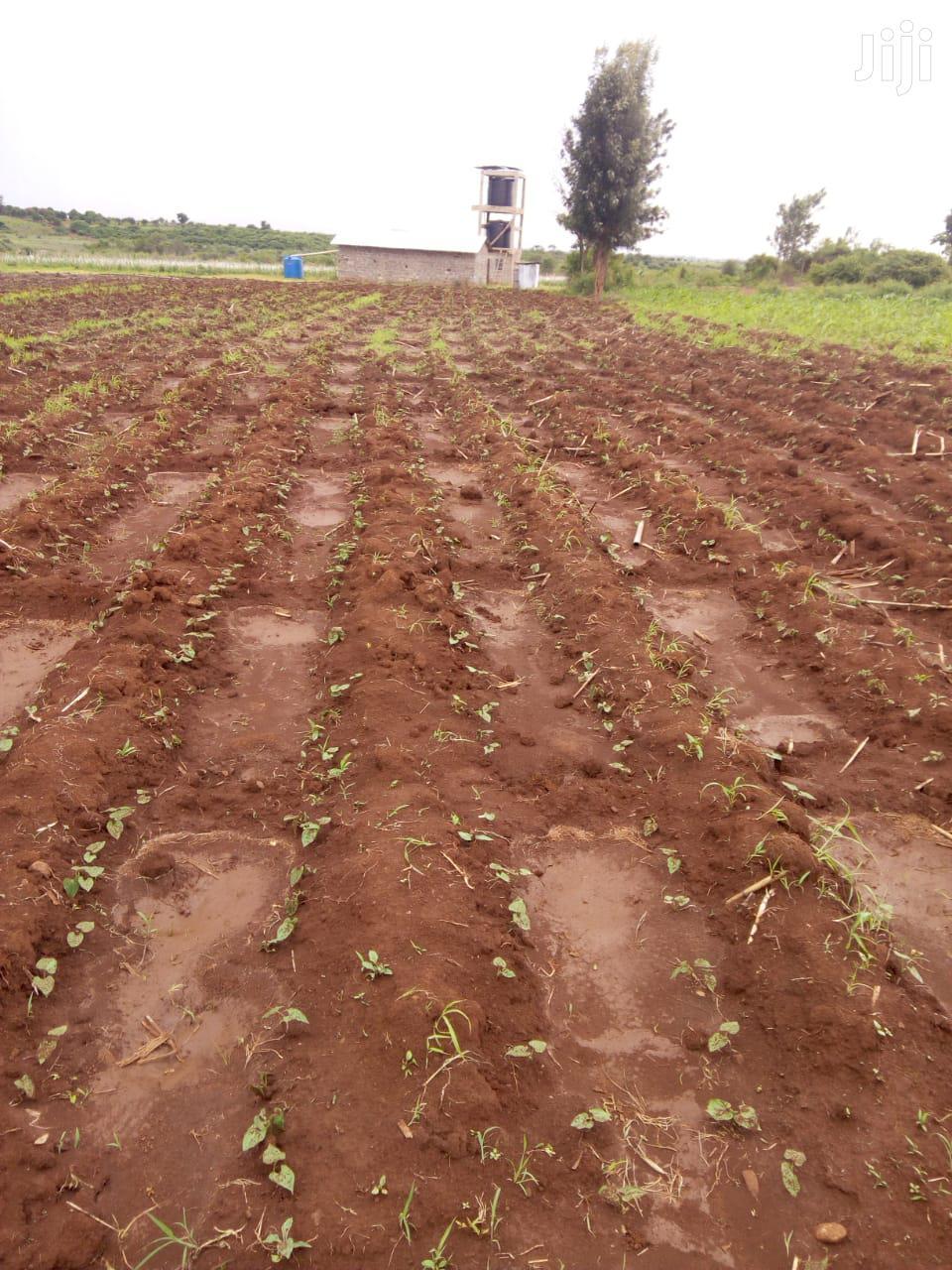 5 Acres For Sale In Kimbimbi Kirinyaga | Land & Plots For Sale for sale in Mutithi, Kirinyaga, Kenya