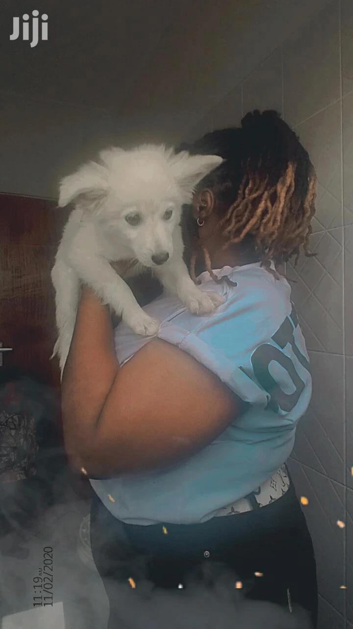 3-6 month Female Mixed Breed Rottweiler | Dogs & Puppies for sale in BuruBuru, Nairobi, Kenya