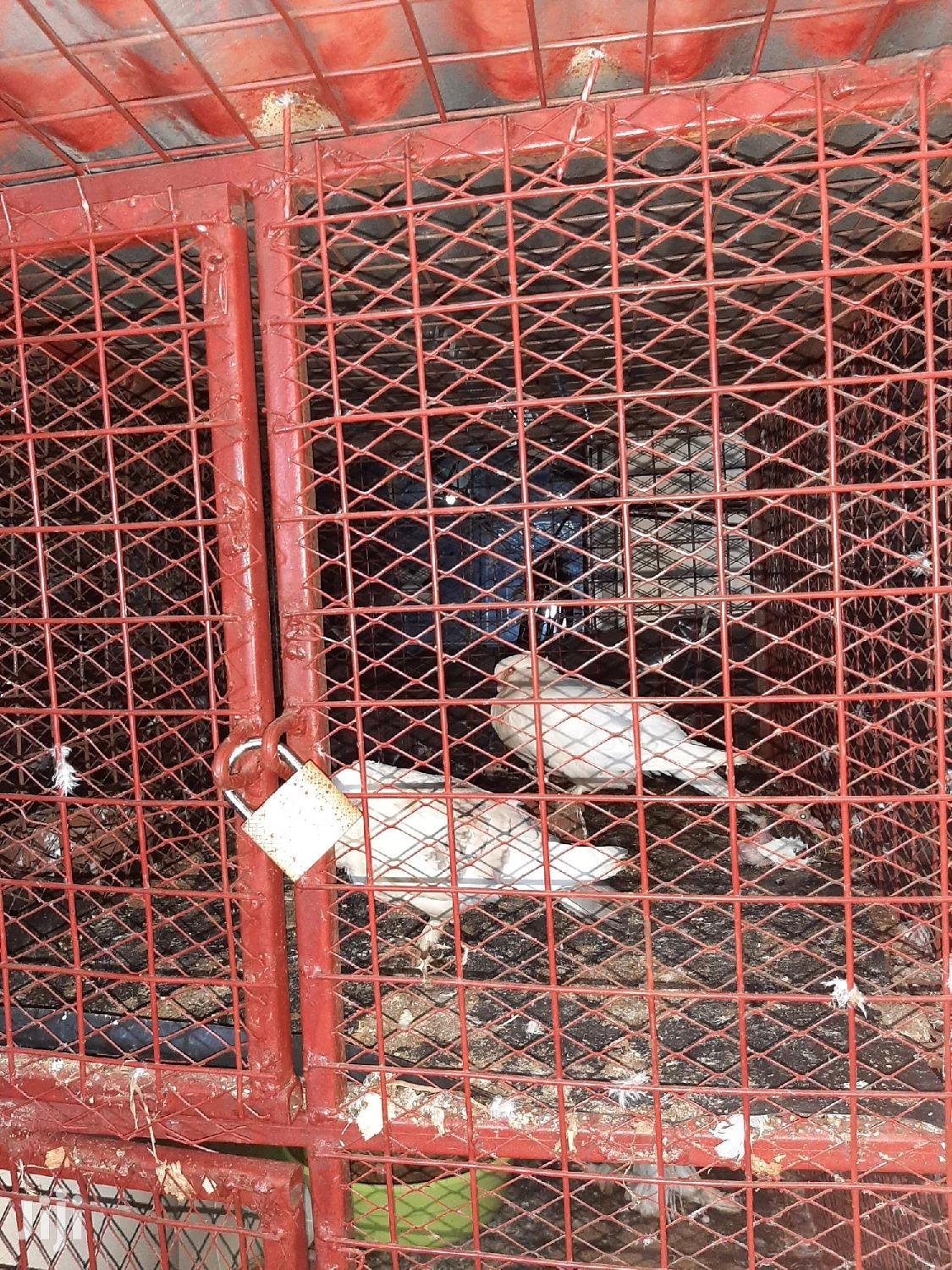 Archive: Pigeon Cage