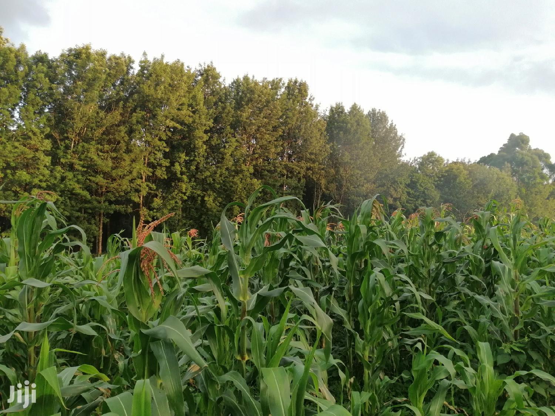 2 Acres Land for Sale in Limuru Kabuku Kiambu County