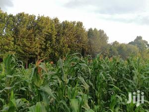 2 Acres Land for Sale in Limuru Kabuku Kiambu County | Land & Plots For Sale for sale in Kiambu, Limuru