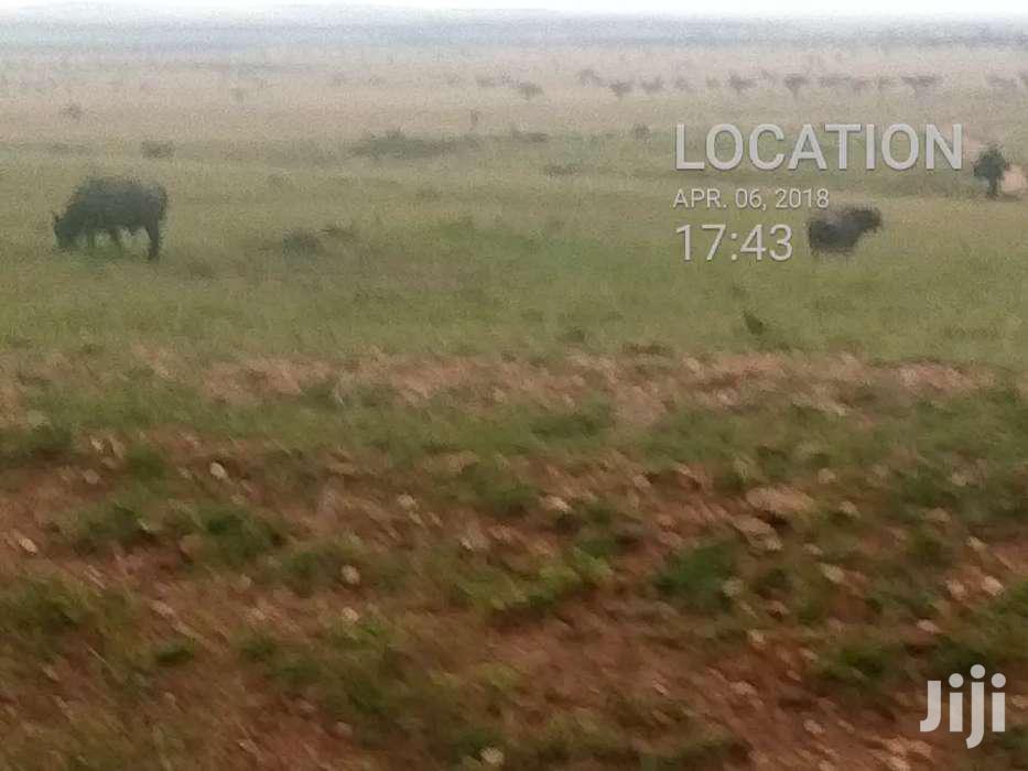 100acres for Sale in Masai Mara   Land & Plots For Sale for sale in Mara, Narok, Kenya