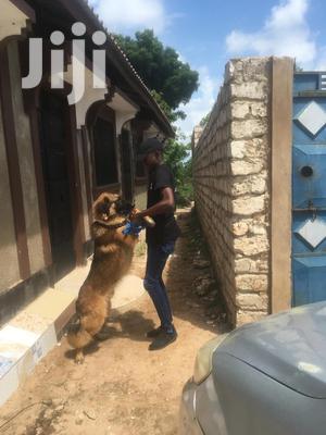 Dog Handler | Security CVs for sale in Mombasa, Tudor
