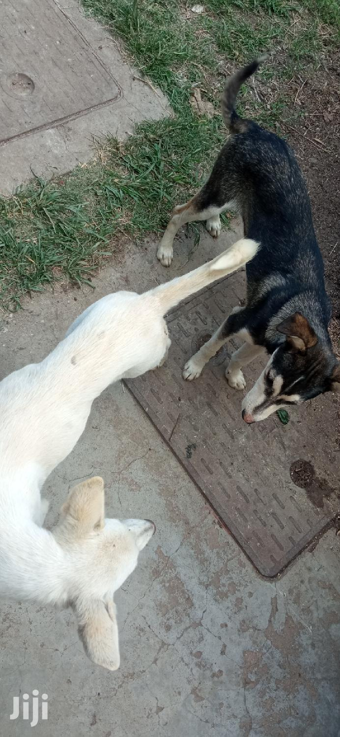 Archive: 3-6 Month Female Mixed Breed German Shepherd