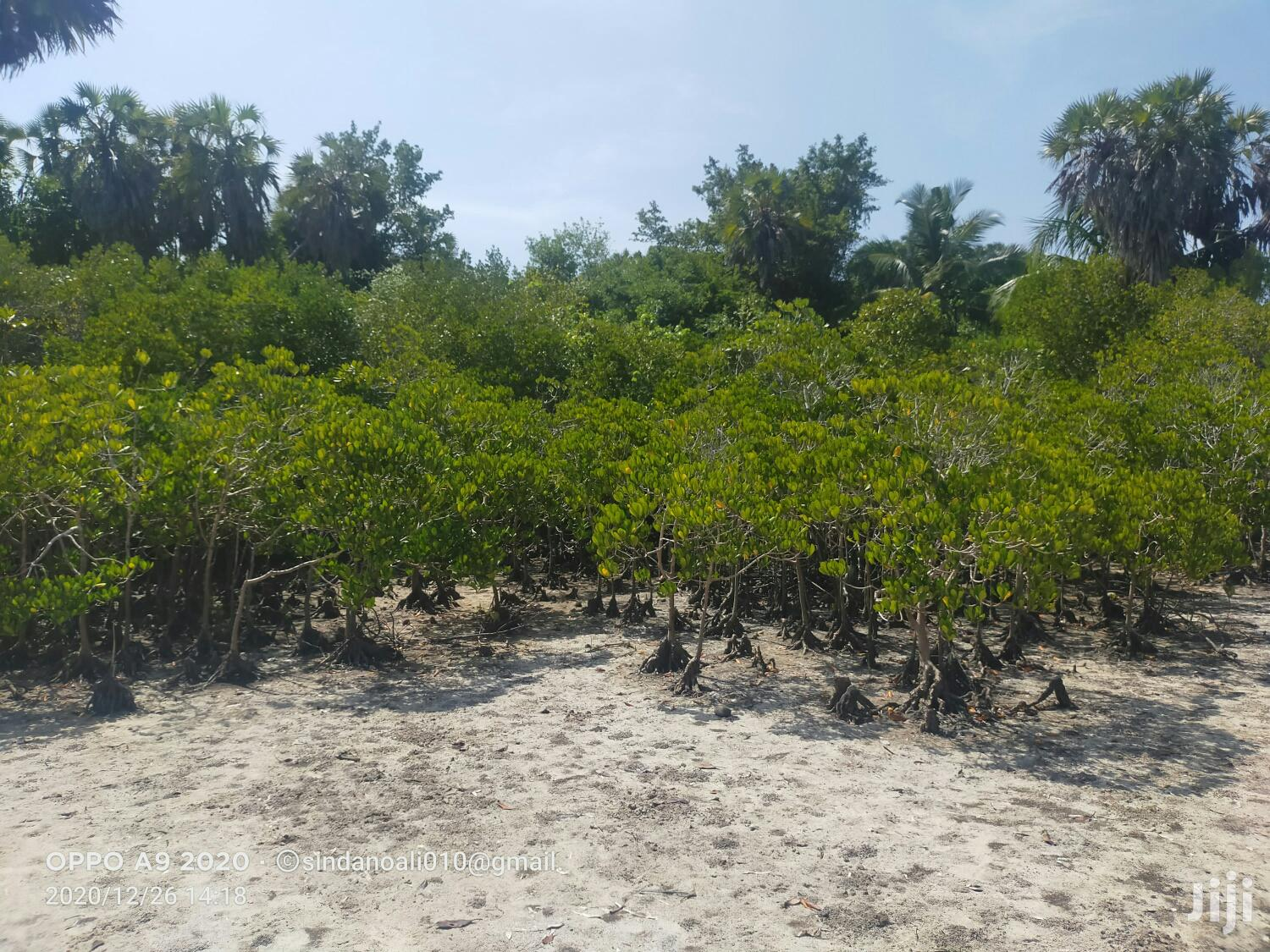 Shimoni 3 Acres Beach Plot for Sale | Land & Plots For Sale for sale in Ramisi, Kwale, Kenya