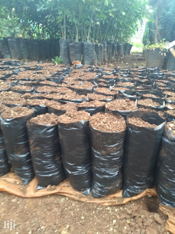 Seedling Bags   Feeds, Supplements & Seeds for sale in Nairobi Central, Nairobi, Kenya