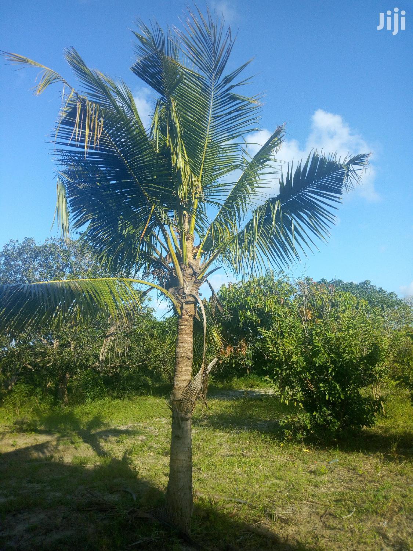 Archive: 8 Acres Malindi Kakuyuni