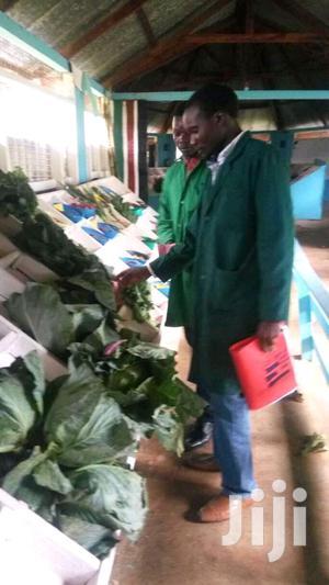 Assistant Farm Supervisor   Farming & Veterinary CVs for sale in Bungoma, Mihuu