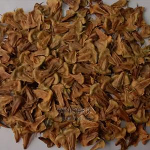 Araucaria Seeds, Christmas Tree | Feeds, Supplements & Seeds for sale in Nairobi, Nairobi Central