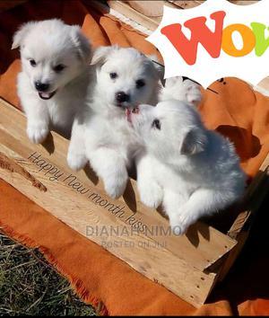 1-3 Month Male Purebred Chihuahua   Dogs & Puppies for sale in Kiambu, Kiambu / Kiambu