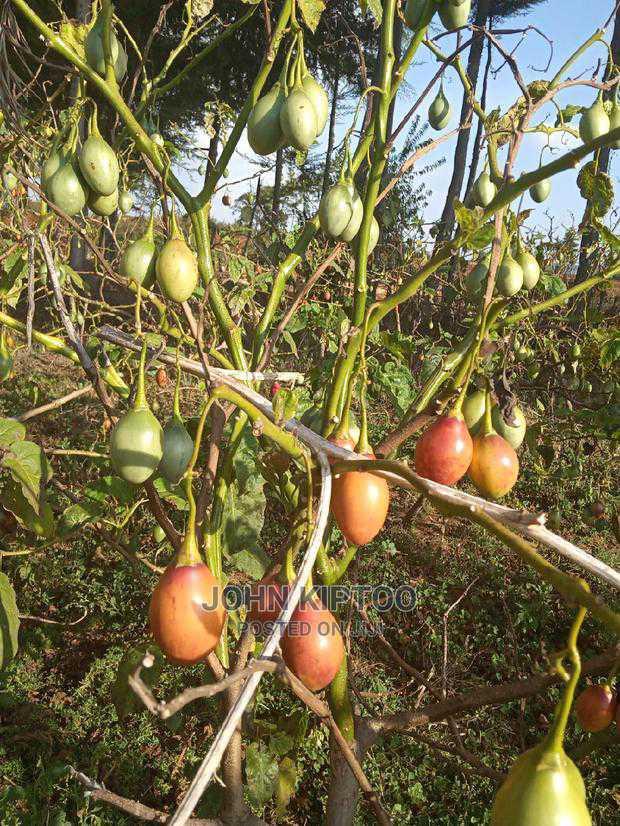 Kajiado Land for Long Lease | Land & Plots for Rent for sale in DalaleKutuk, Kajiado, Kenya