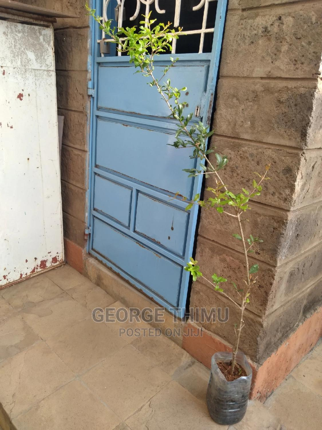 Giant Size Grafted Pomegranate Seedlings on Sale | Feeds, Supplements & Seeds for sale in Umoja, Nairobi, Kenya