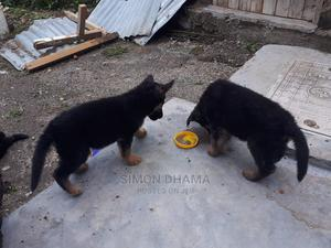 3-6 Month Male Purebred German Shepherd | Dogs & Puppies for sale in Nairobi, Eastleigh
