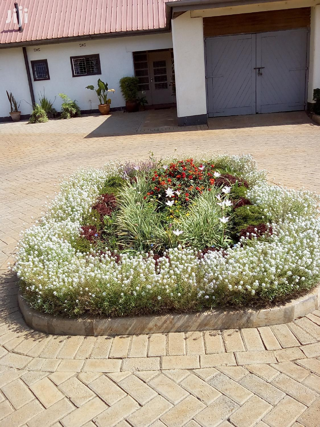 Archive: Excellent Landscaping And Gardening