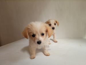 1-3 Month Female Mixed Breed Jack Russell Terrier   Dogs & Puppies for sale in Nairobi, Langata