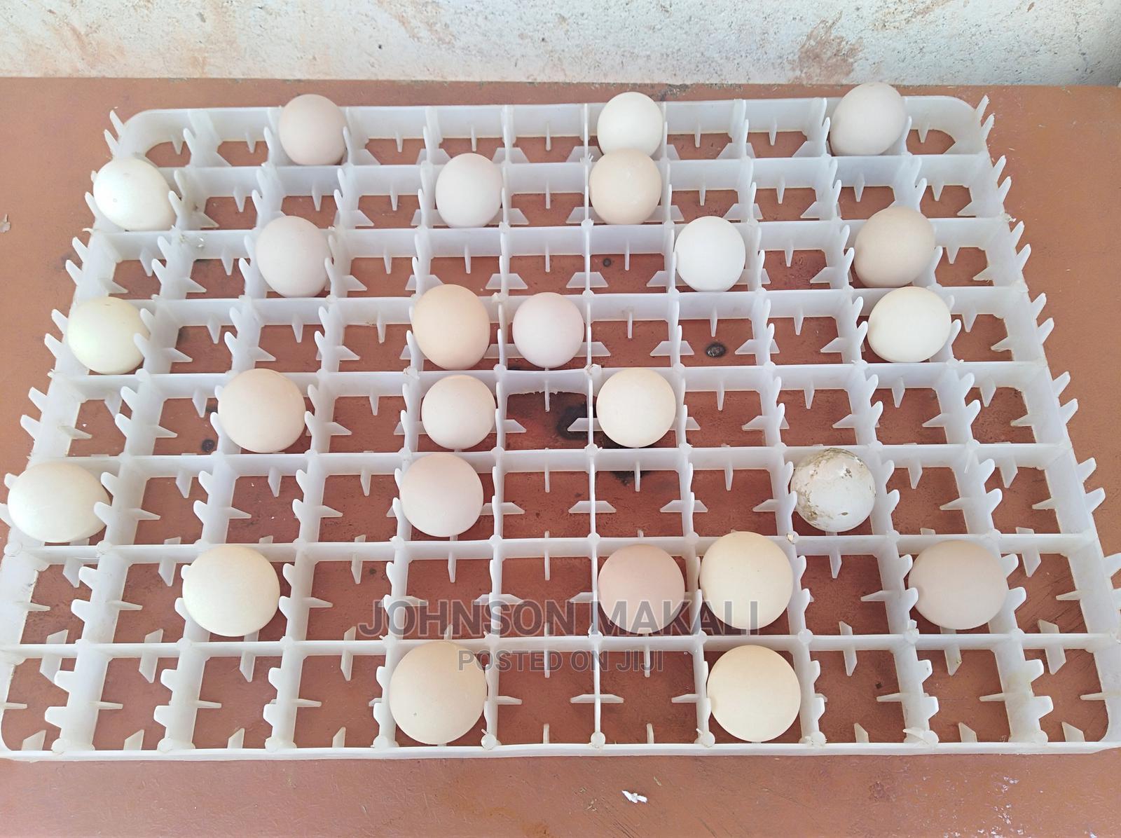 Fertile Pure White Guineafowl Eggs Available | Meals & Drinks for sale in Kikuyu, Kiambu, Kenya