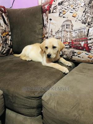 1-3 Month Male Purebred Labrador Retriever | Dogs & Puppies for sale in Nairobi, Nairobi Central