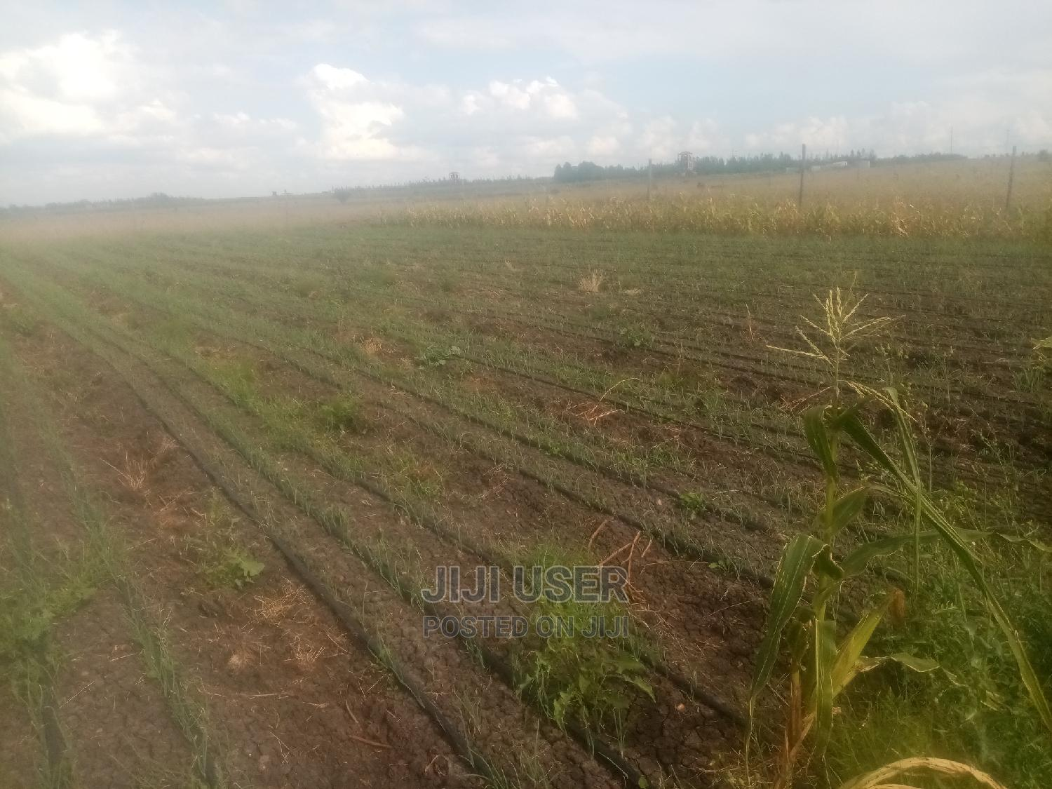 Archive: 2 Acres for Lease Installed With Drip and Plenty of Water
