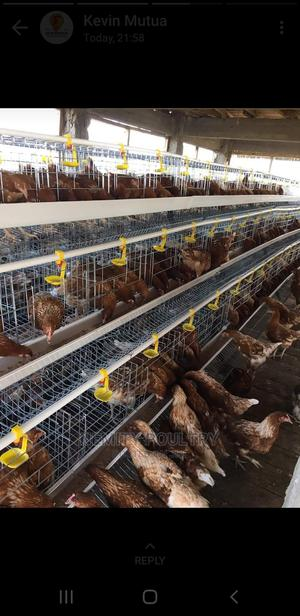 Chicken Cages on Sale   Farm Machinery & Equipment for sale in Nairobi, Imara Daima