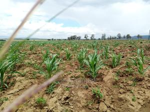 Affordable Plots for Sale | Land & Plots For Sale for sale in Naivasha, Mai Mahiu