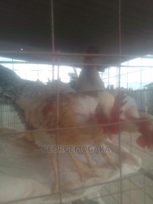 Improved Kienyeji Cocks | Livestock & Poultry for sale in Machakos, Syokimau